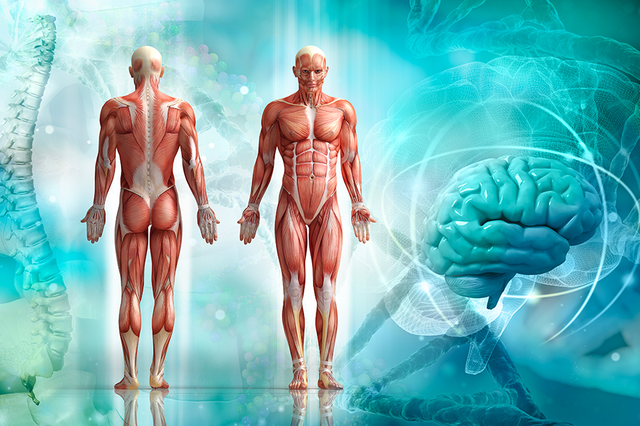 Tronc commun : anatomie, physiologie, pathologie et pratique professionnelle